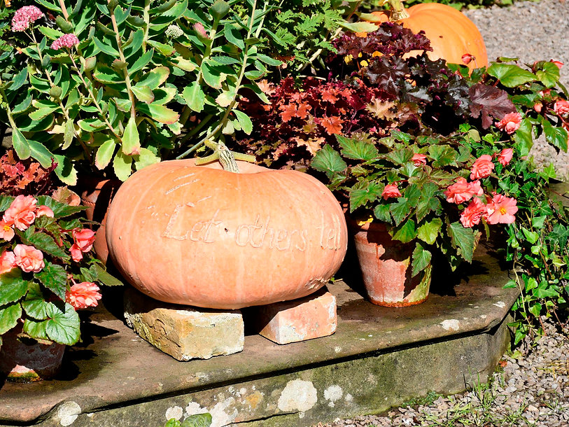 Tyntesfield poetic pumpkin 1 (c) Nationa
