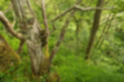 rewild_rainforest.a2c7d4ec36e5782e211d06