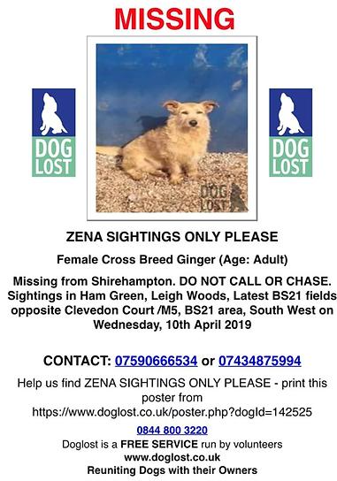 Missing dog.PNG