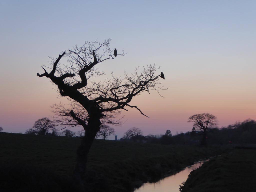 Evening walk in Nailsea