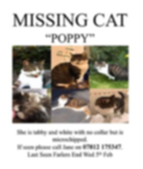 Missing cat..jpg
