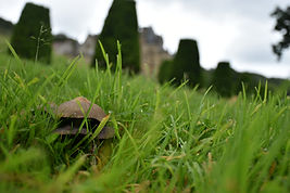 nna Kilcooley_Tyntesfield_fungus hosue.J