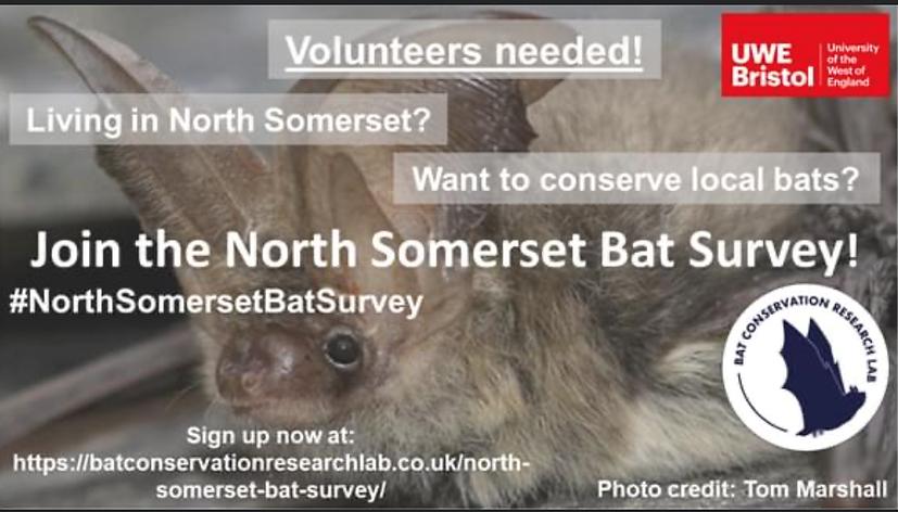 Bat survey.PNG