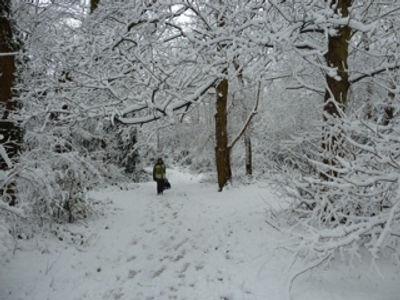 FoTP Snowy walk through Nowhere Wood (80