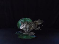 La grenouille et son nenuphar