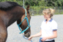 Cornwall veterinary physiotherapy