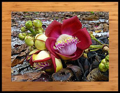 Outra Natureza - Fotografia + livro