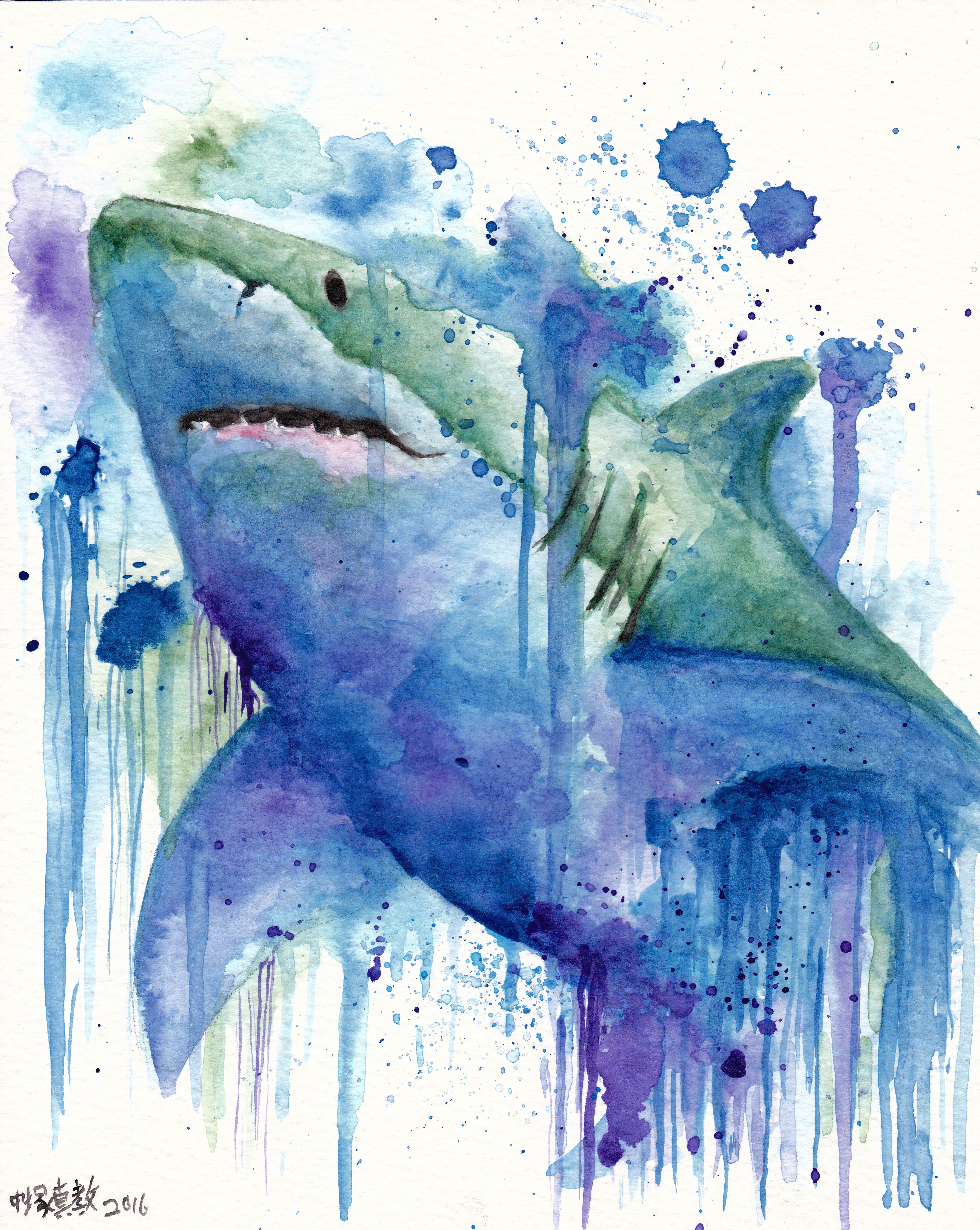 watercolour shark