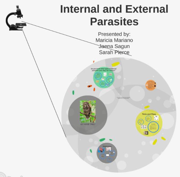 Internal & External Parasites