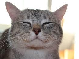 Reading Feline Emotions