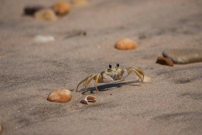 Life on the shoreline
