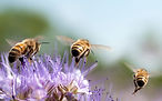 Bayer-Bees_Matte-Article_4-360x200.jpg