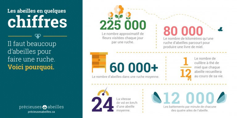 Bees_Matter_Infographics_French-01-768x3