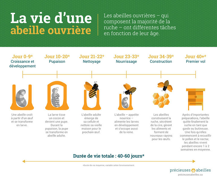 Bees_Matter_Infographics_French-01-768x6