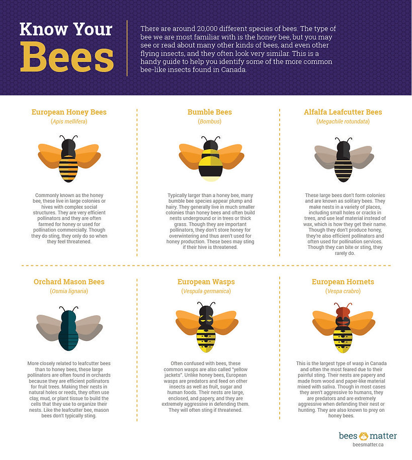 Know-Your-Bees-Infographics-e14979821311
