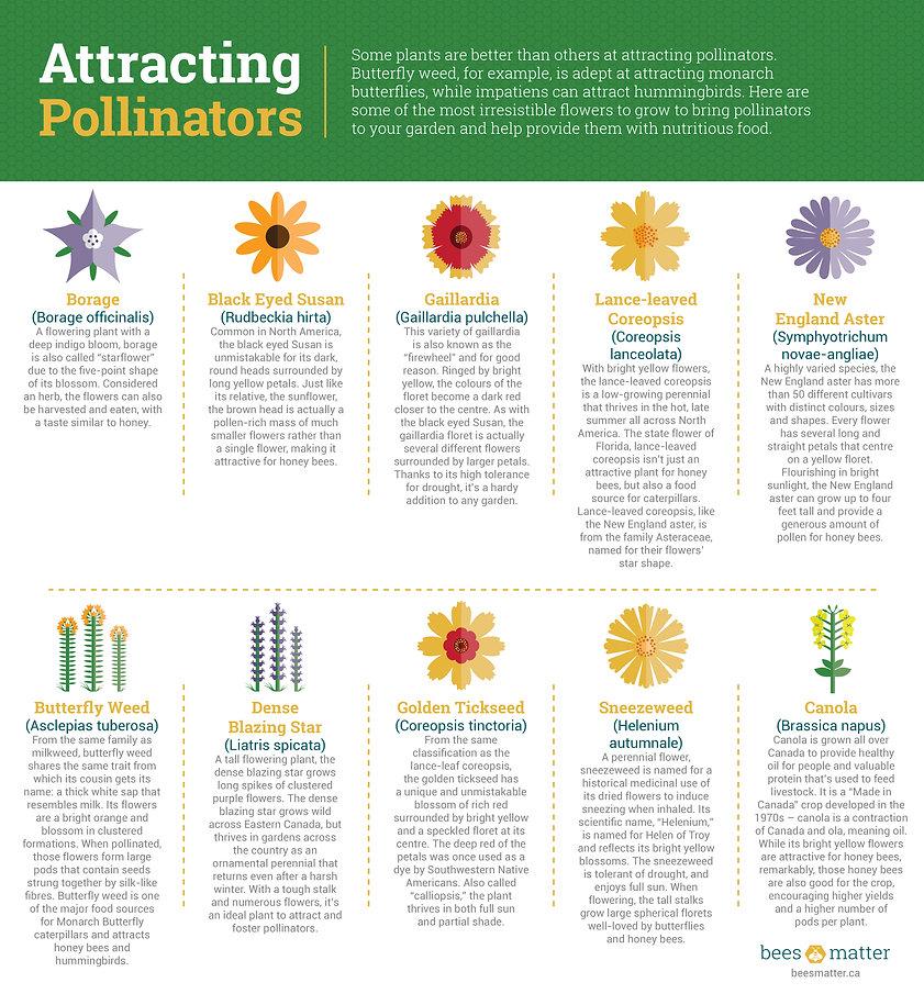 Bees_Matter_Infographics_09.jpg