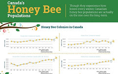 2020%20bee%20populations%20canada%20jpeg
