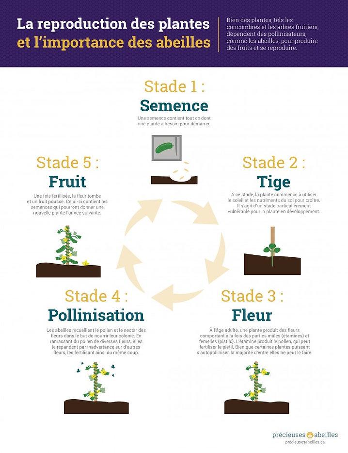 la-reproduction-des-plantes-et-limportan