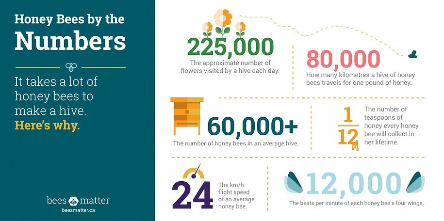 Bees_Matter_Infographics-01-1024x510.jpg