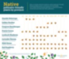 Native-Pollinator-Friendly-Plants_EN.jpg