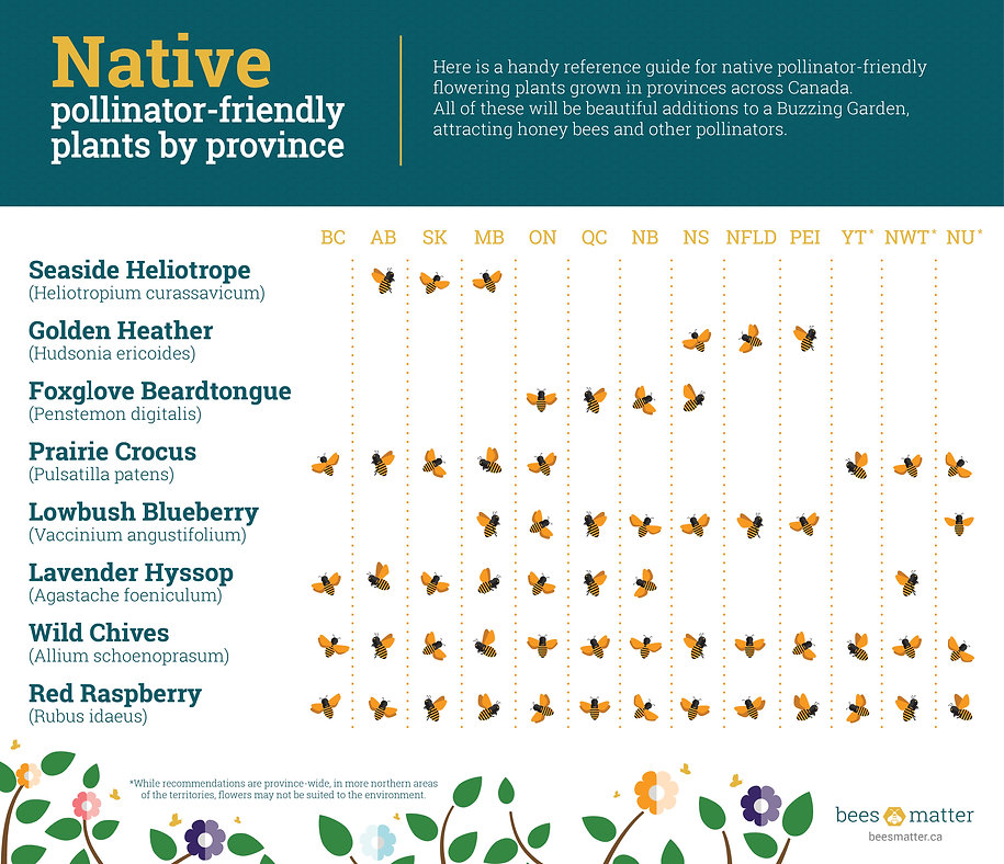 Native-Pollinator-Friendly-Plants_EN.jpg