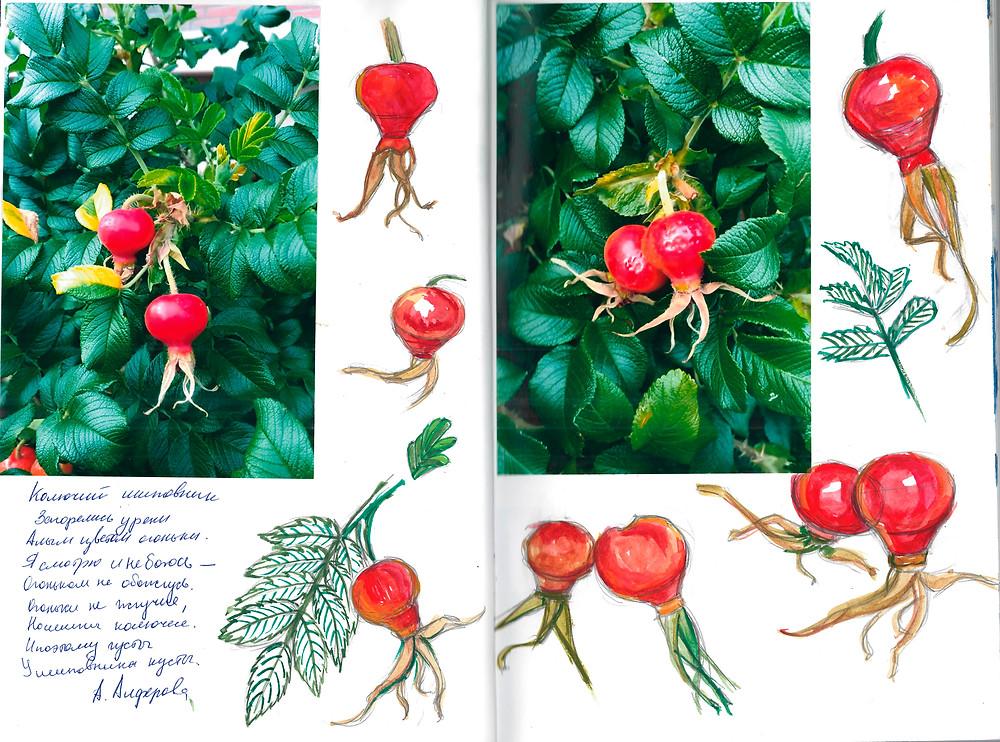 Фото и акварельные эскизы для печати на ткани