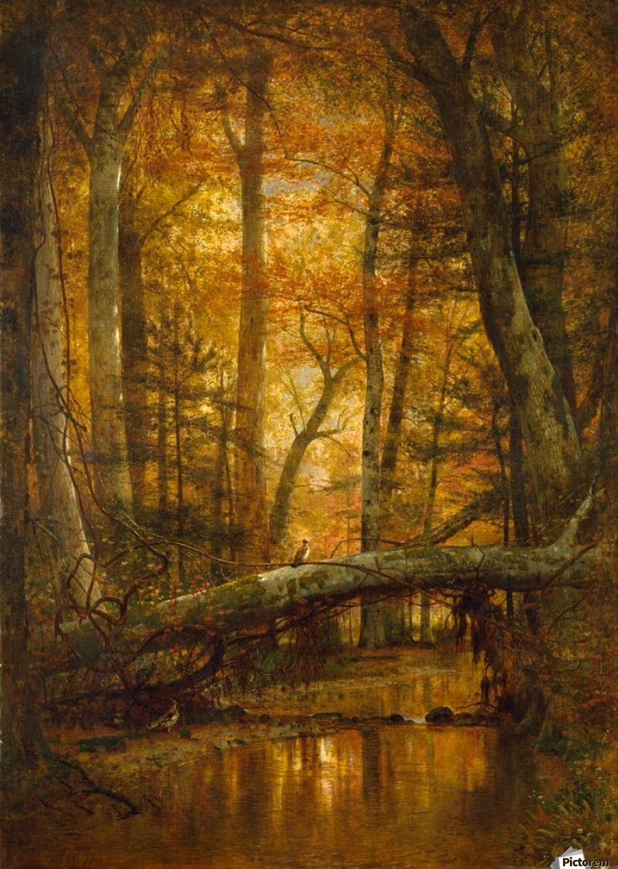 Details from a forest - Thomas Worthington