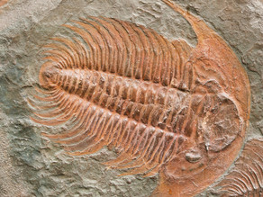 A Nameless Fossil