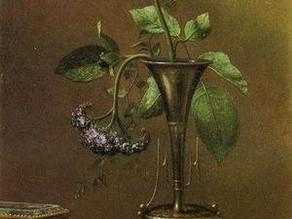 Beautiful New Rose by Guido Cavalcanti