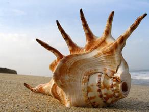 The Seashell