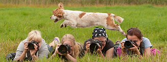 Nick-Ridley-Dog-Photography-Lessons.jpg