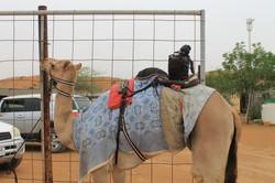 Верблюд с электронным жокеем