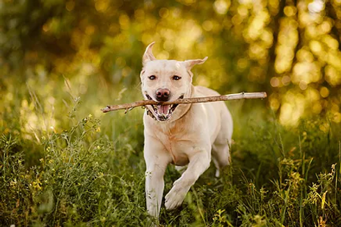 dog in the woods.webp