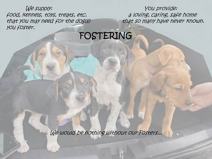 Pic to Alter for Foster Application.jpg