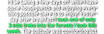 forest1.png