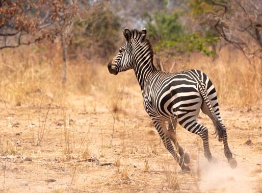 Le Groupe REYL soutient le programme « Sauvons nos espèces » de l'UICN