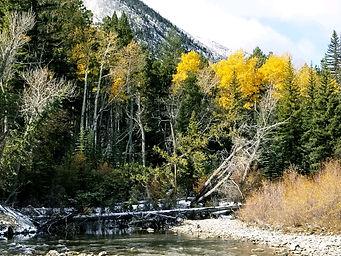 Chalk Creek Meadows creek.jpeg