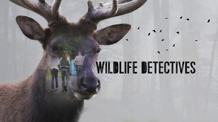 WildlifeDetectives.jpg