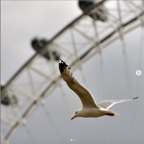 fly on London Eye.png