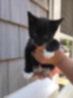 Donate Cat Supplies to CAP Hoboken Hudson County Animal Rescue