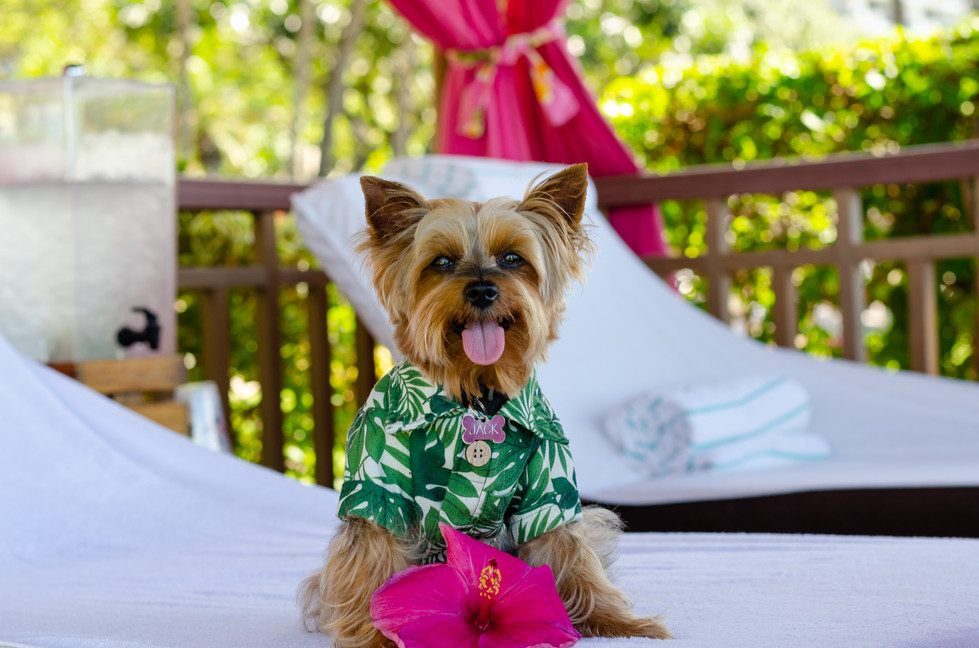 Hawaiian Family Vacation at the Dog-Friendly Hyatt Regency Maui Resort and Spa