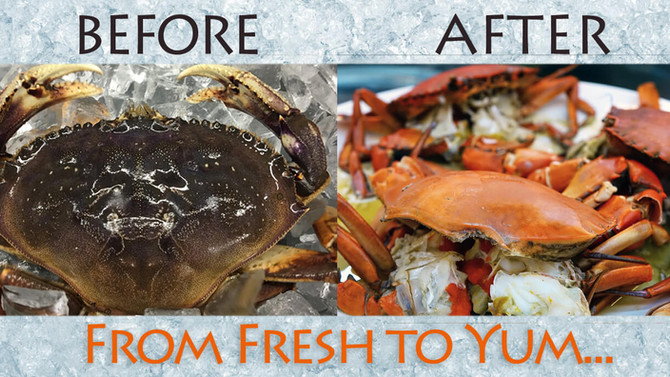 Limited Time! SALE Live Fresh Dungeness Crabs $5.99/lb