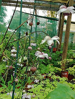 vgrareplant