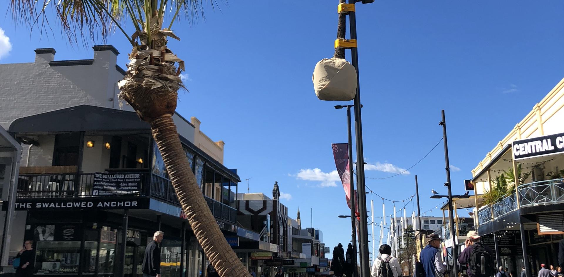 Palm up a Pole