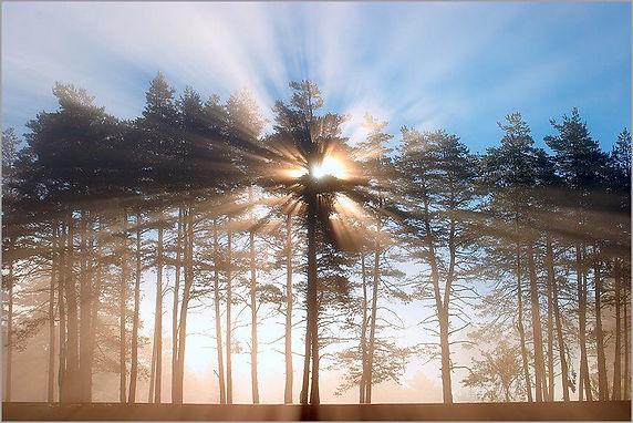 soleil arbres.jpg