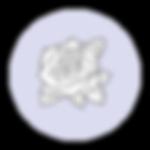 dg-symbol-.png
