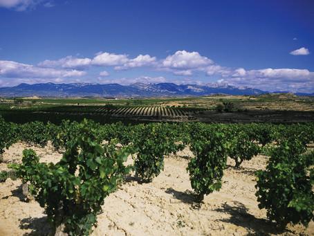 Los vinos de unPueblo Medieval
