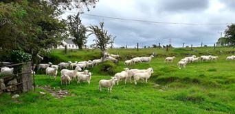 Sheepdog3b.jpeg