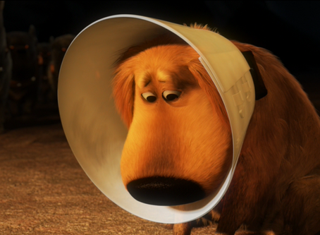I Do Not Like This Cone of Shame