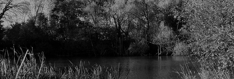 Lake Banner.jpg
